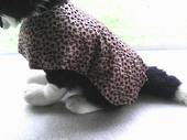 Leopard Print dog coat