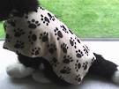 Cream Paw Print Dog Coat